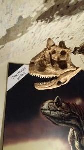Dinosauri a Gubbio - Scheletri