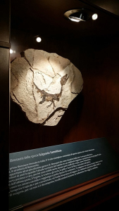 Dinosauri a Gubbio - Fossili