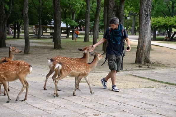 Viaggio di nozze in Giappone - cerbiatti giapponesi