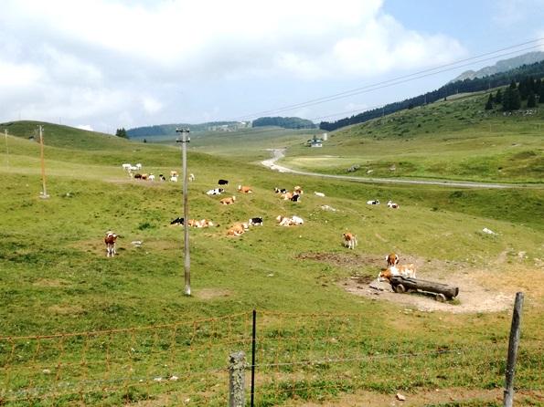 Prima vacanza con il cane in Trentino - Malga Fratte