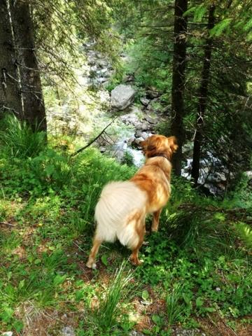 Prima vacanza con il cane in Trentino - sentieri