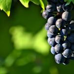 Guida ai vini dell'Umbria