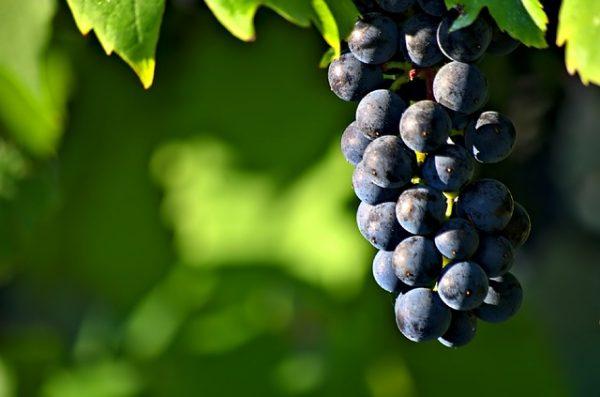 vini doc dell'Umbria