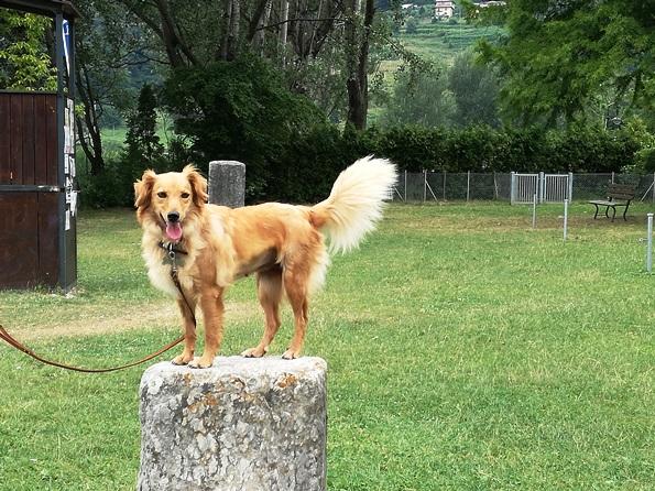 Prima vacanza con il cane in Trentino - agility dog alla Bau Beach